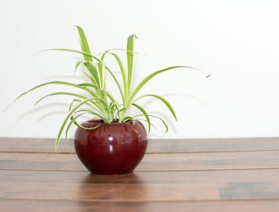 Health benefits of inddor plants